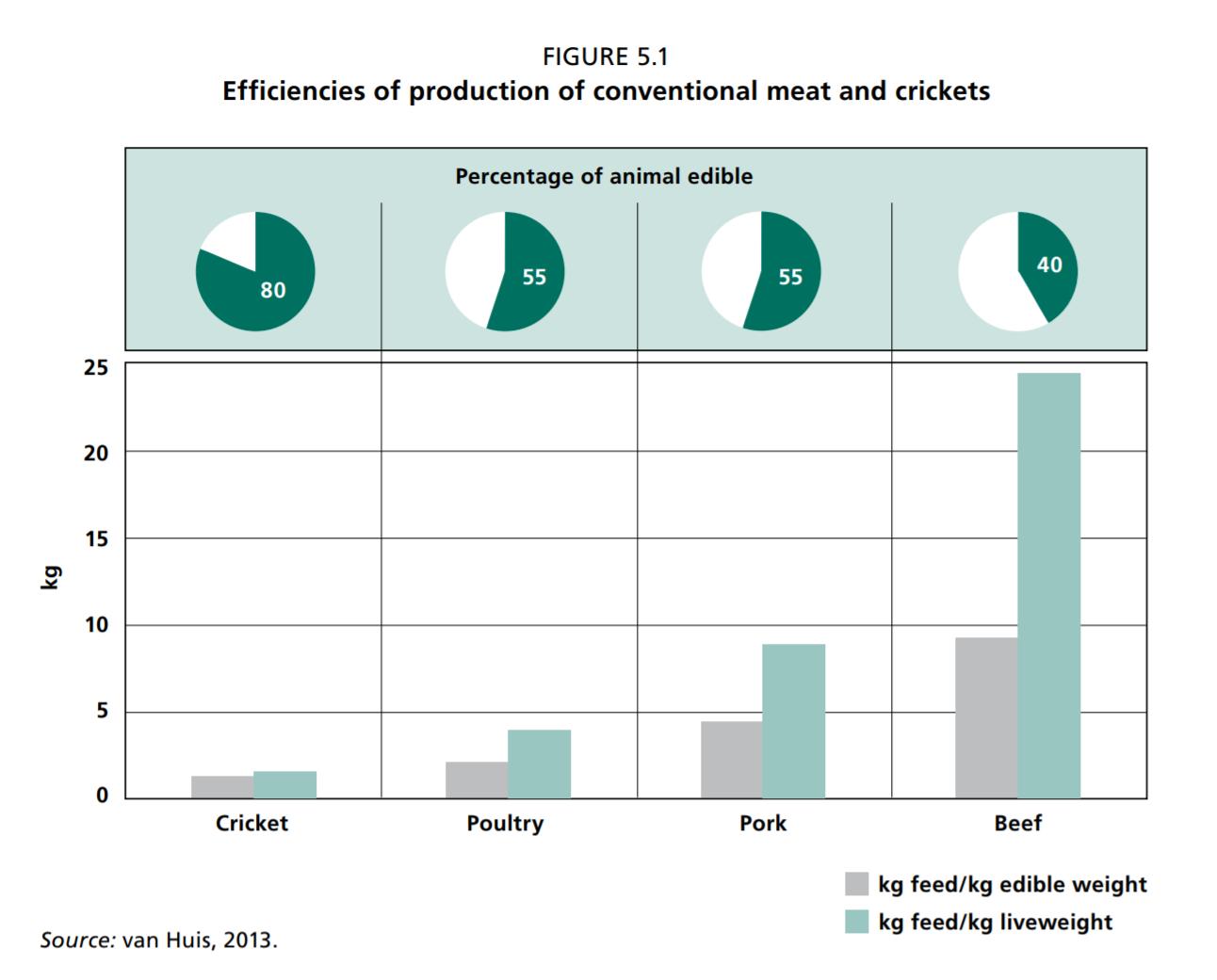 Op til 80% af en græshoppe er spiselig sammenlignet med 55% af en kylling og en gris og 40% for kvæg. For hvert kilo af husdyrets vægt kræver det følgende mængde foder (i en typisk amerikansk produktion): 2,5 kg til kyllinger, 5 kg til grise og 10 kg til køer. Insekter kræver meget mindre. Produktionen af 1 kg fårekyllinger kræver 1,7 kg foder. Illustration fra: FN's Fødevare og Landbrugsorganisations rapport fra 2013.